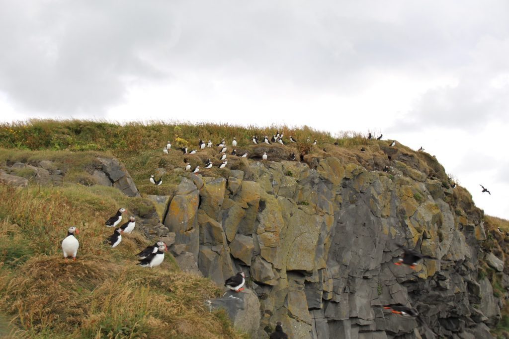 Dyrhólaey peninsula, puffins and Vík